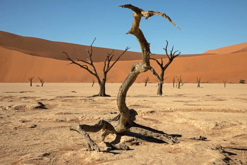 Deadvlei Petrified Trees